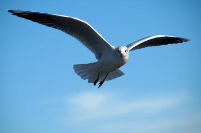 gull-591350_640